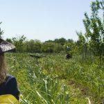 La Federación de Asociaciones de Mujeres Rurales, Fademur de Castilla-La Mancha, ha participado en los distintos grupos de trabajo sobre mujeres rurales dentro del II Plan Estratégico para la Igualdad de Oportunidades entre el Hombre y la Mujer en Castilla-La Mancha