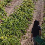 Fademur participa en el congreso de la Sociedad Española de Agricultura Ecológica